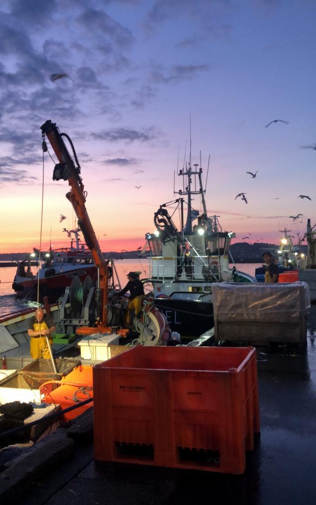 La pêche à la sardine sur Le port de Douarnenez, au petit matin