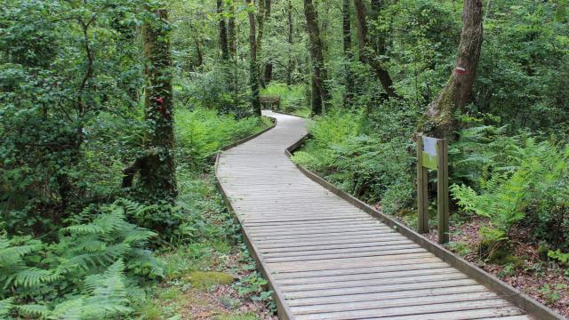 Névet woods