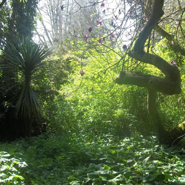 Le jardin exotique de l'île Tristan