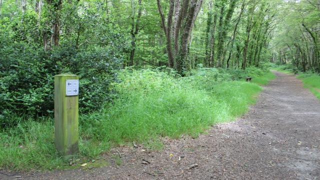 Chemins de randonnées et VTT dans le Bois du Névet - Le Juch - Kerlaz