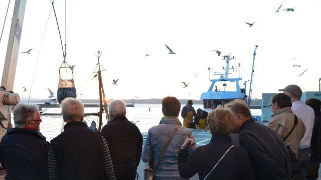 Visite guidée au port de pêche, le Rosmeur