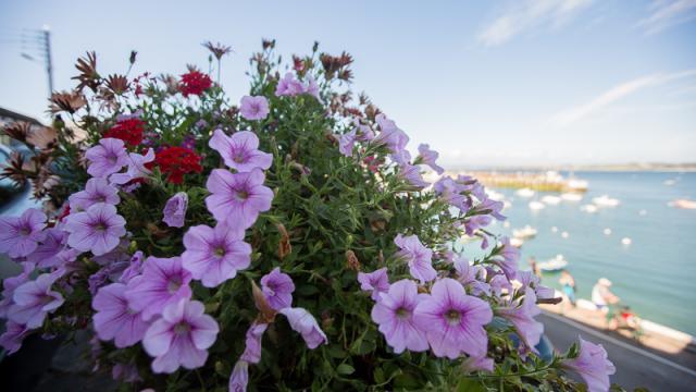 Vue sur le port du Rosmeur